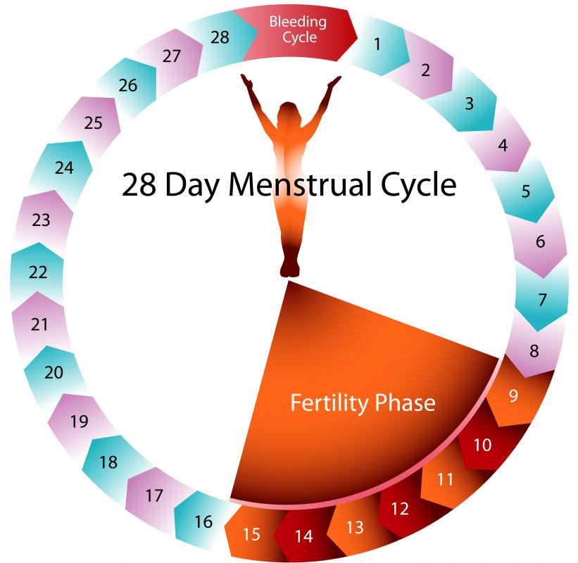 Women who have 28 day menstrual cycles may experience increased fertility between days 9 and 15.