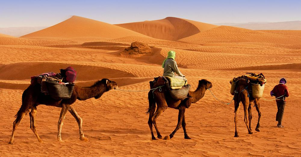 Merchants have used camels to cross the Gobi desert for thousands of years.