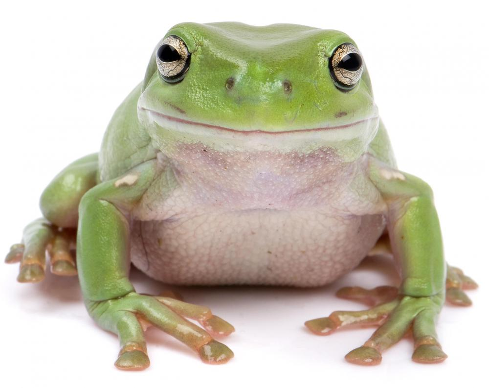 Frogs undergo a type of metamorphosis as they age.