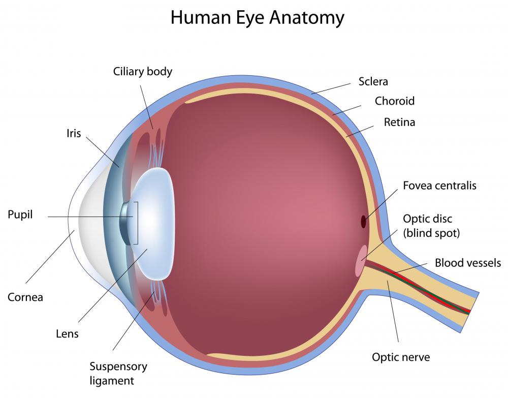 Anatomy of the human eye.