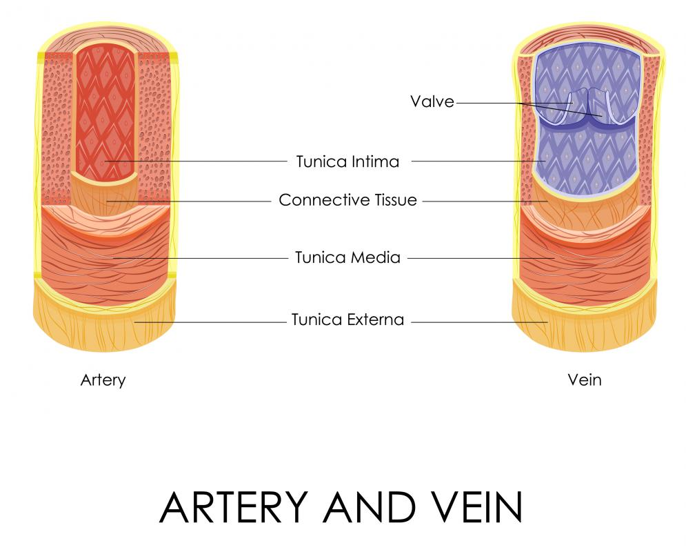 Arteries and veins are considered when measuring vascular tone.
