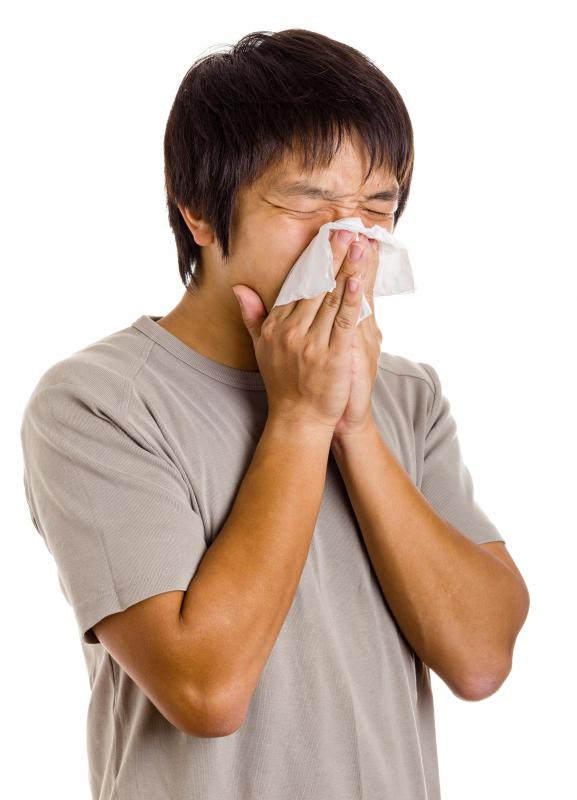 Sneezing is a common sign of chamomile allergy.