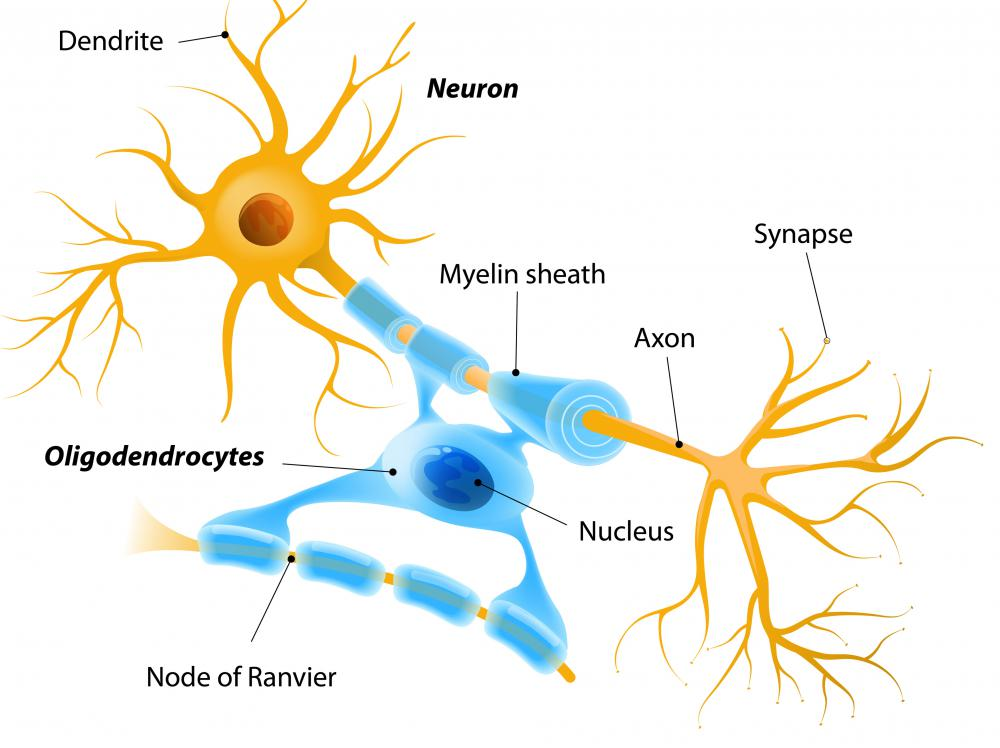 White matter is made up primarily of axons of nerve cells and are full of myelin, a whitish fatty material.
