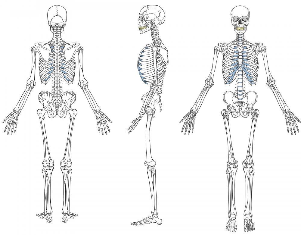 There are different ways in which a skeletal system diagram can be created.
