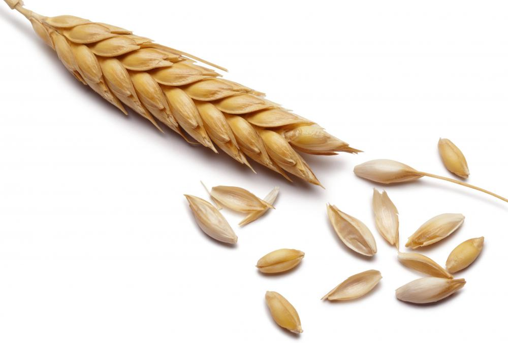 Barley, one of the earliest crops to be grown.