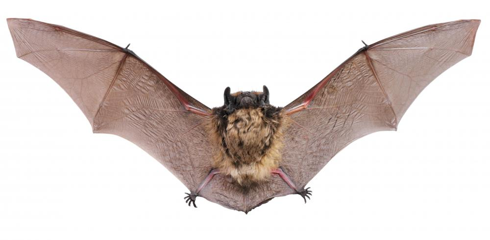 Feces from bats has some uses, but not in mascara.