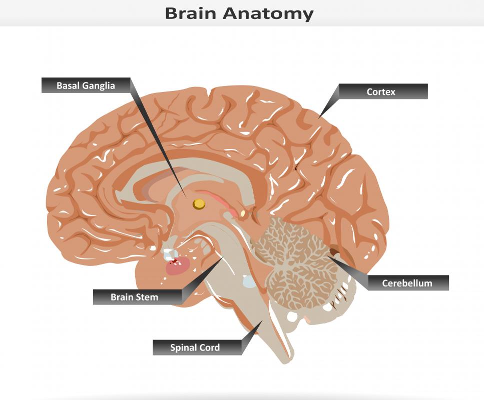 Damage to the basal ganglia is one cause of akinesia.