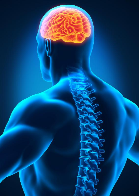 The medulla oblongata is part of the brainstem, which helps connect the brain to the spinal cord.