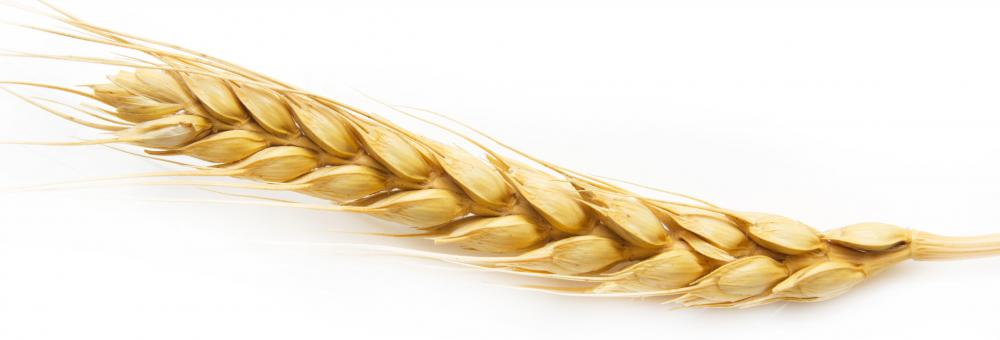 Barley, which contains amino acids.