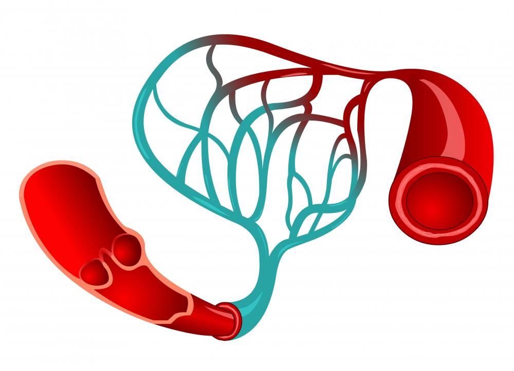 "Capillaries act as ""communicators"" between arteries and veins."