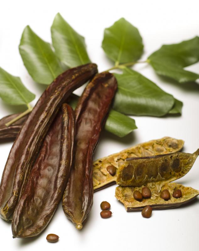 People with gallstones often need to avoid chocolate, and can use carob as a substitute.