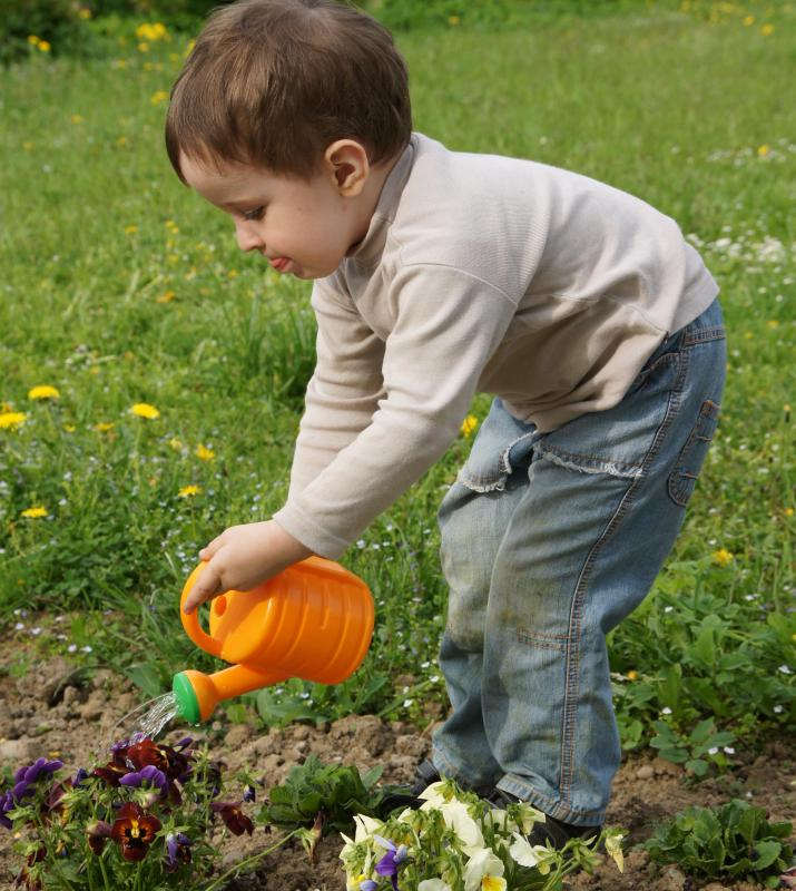 Watering cans are often used to apply small amounts of water to precise areas in a garden.