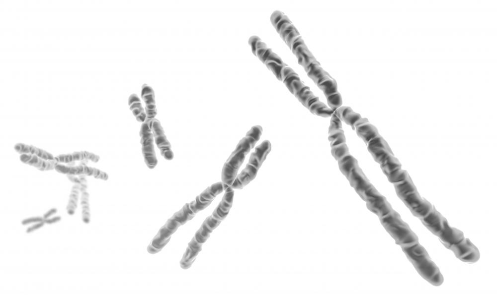 Each chromosome is made of protein and a single molecule of DNA.