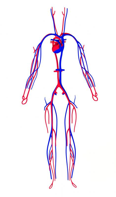 Perfusion concerns the body's system of carrying blood to the capillary beds.