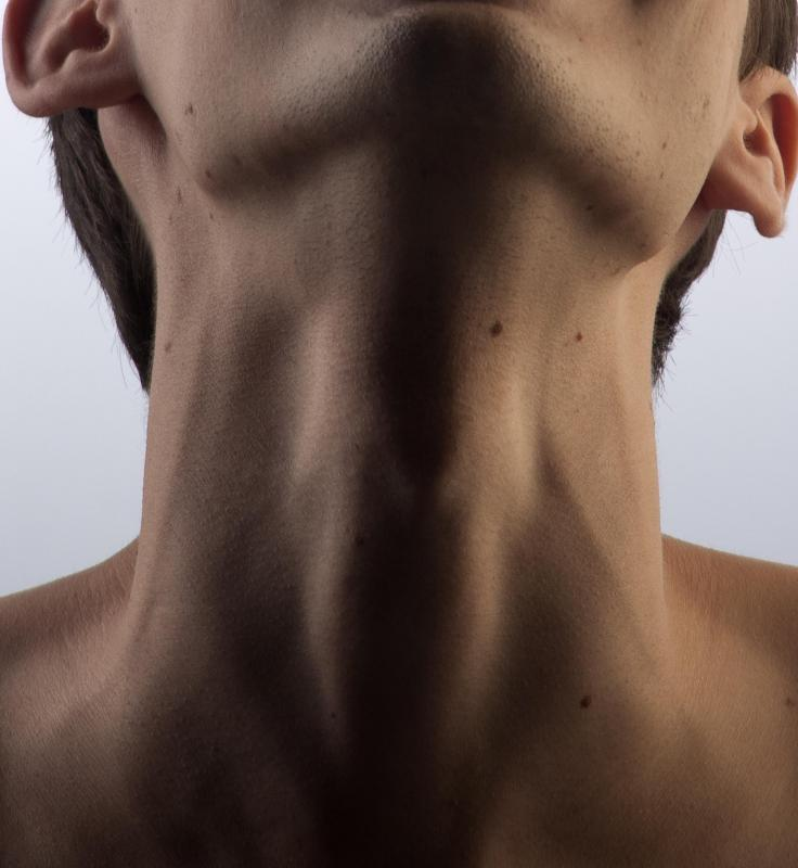The thyroid sits just behind the Adam's apple in humans.