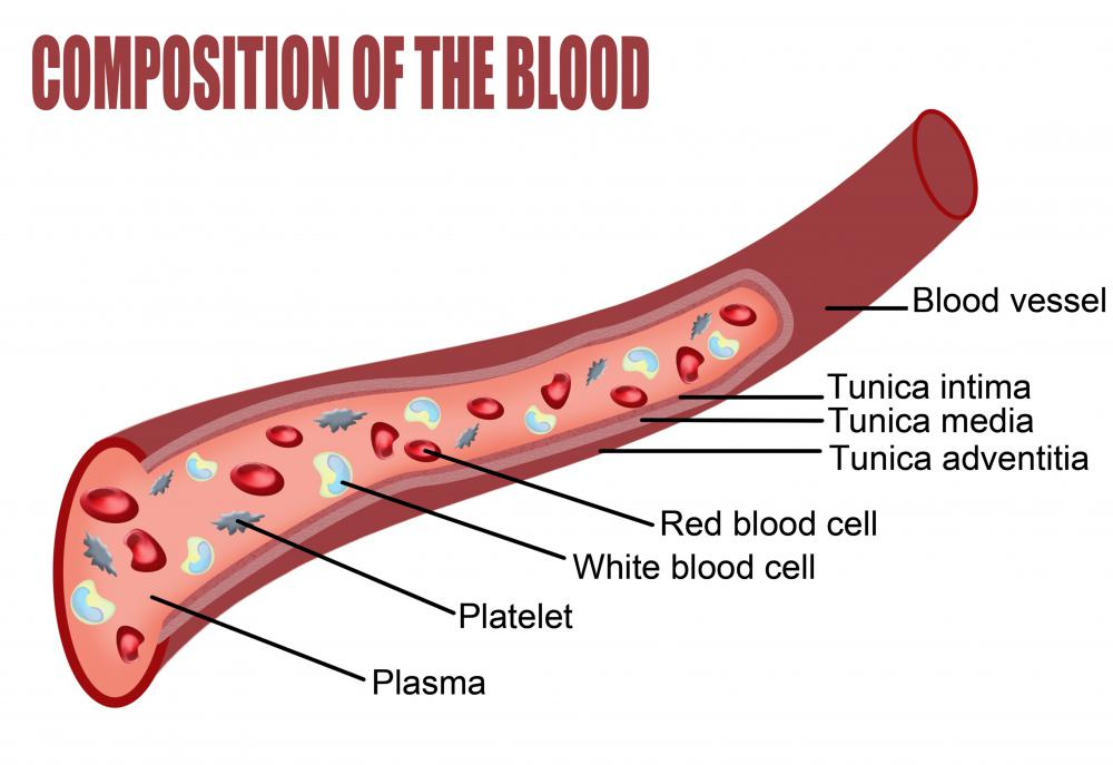 A blood composition diagram, showing red blood cells.