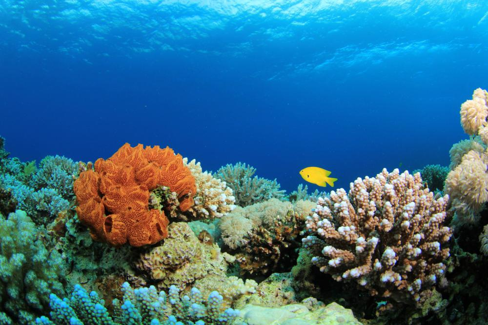 The Great Barrier Reef, a coral reef like this one, is found off the coast of Australia.