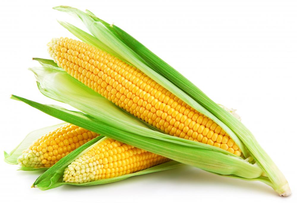 Western societies were introduced to crops like maize as part of the Columbian Exchange.