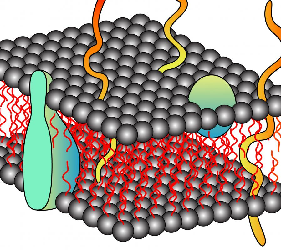 The cell membrane is comprised mostly of lipids and proteins.