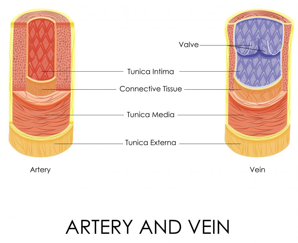 Arteries in the leg carry oxygenated blood, while veins carry deoxygenated blood.