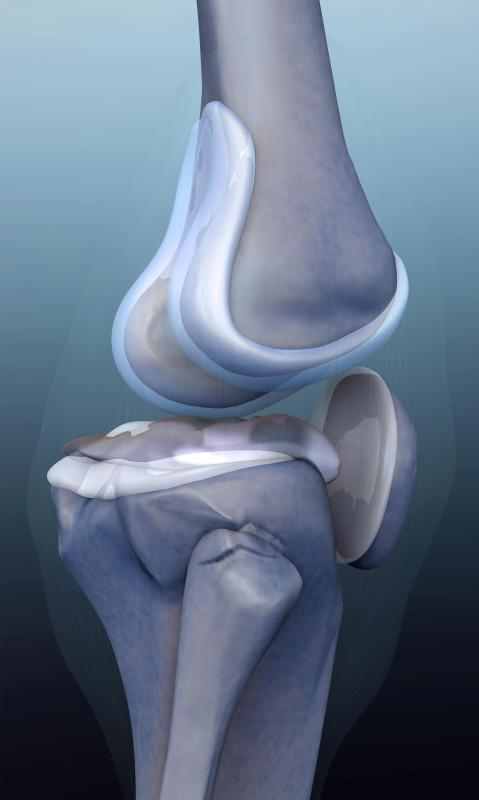 Cartilage plays an important role in joints throughout the body, such as the knees, but can wear out after heavy use or injury.