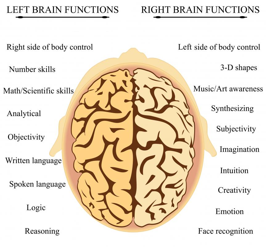 Like the brain itself, every lobe in it is divided into a left and right side.