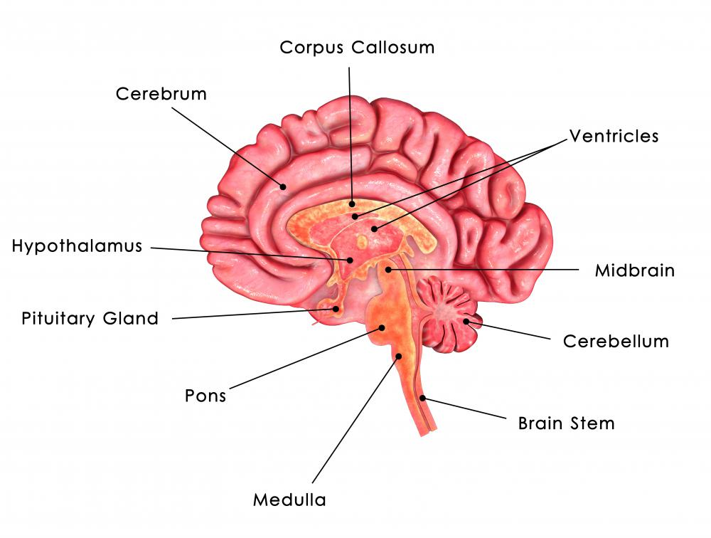 Brainstem reflexes are involuntary responses to stimuli mediated by the brainstem.