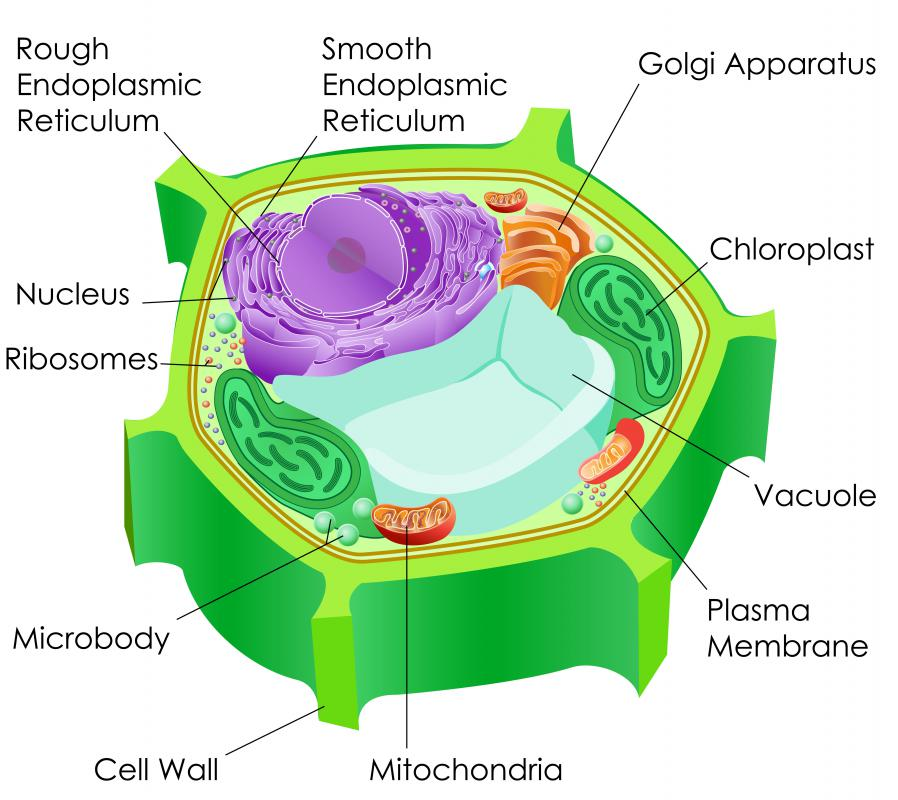 The plasma membrane is an important structure of all cells, including plant cells.