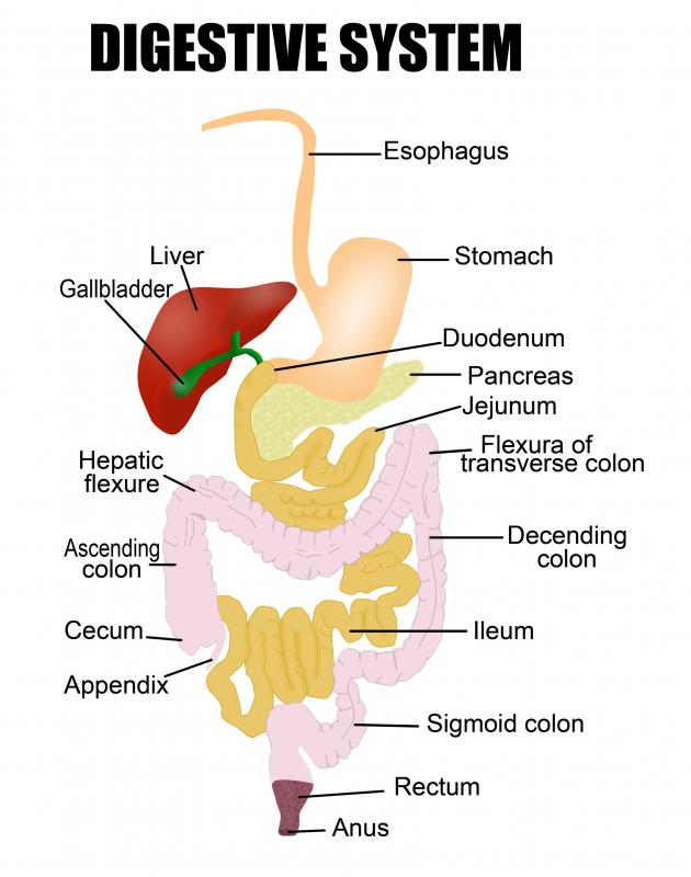Probiotic supplements can aid digestive health.