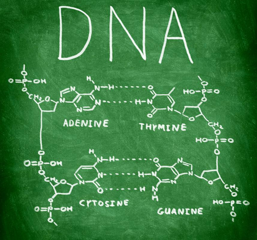 Adenine is a nucleobase in DNA that binds only to thymine.