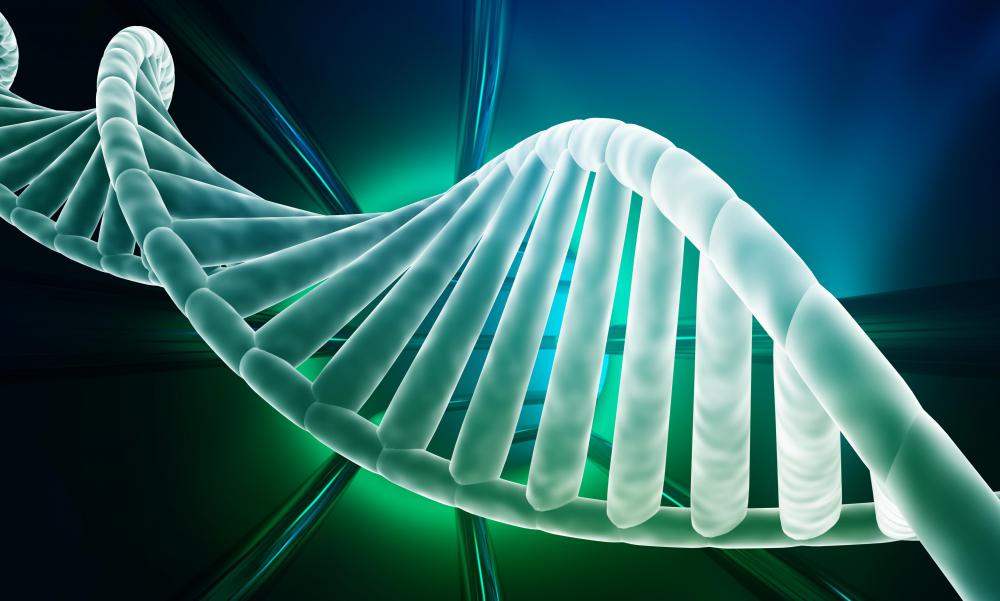 DNA is constructed from nucleotides during the anabolic process, which is a type of metabolic process.