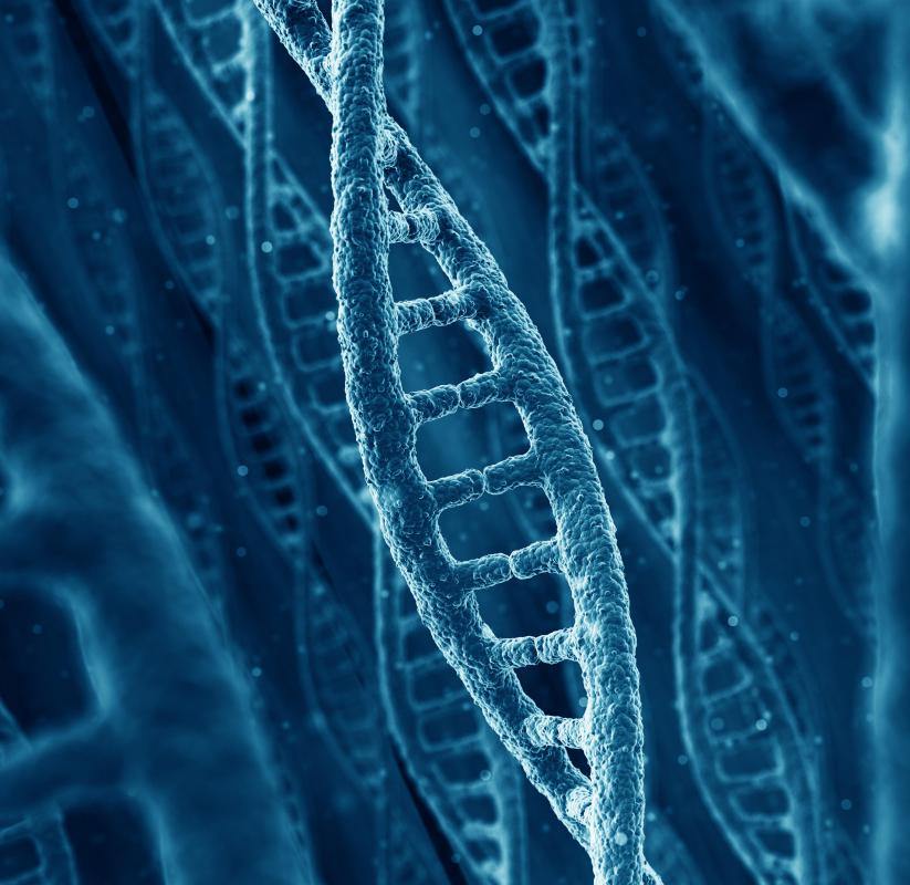 The majority of a human's DNA will match that of any other human.