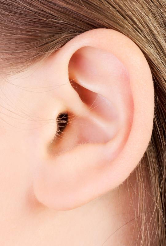 The outer ear is formed by cartilage cells.