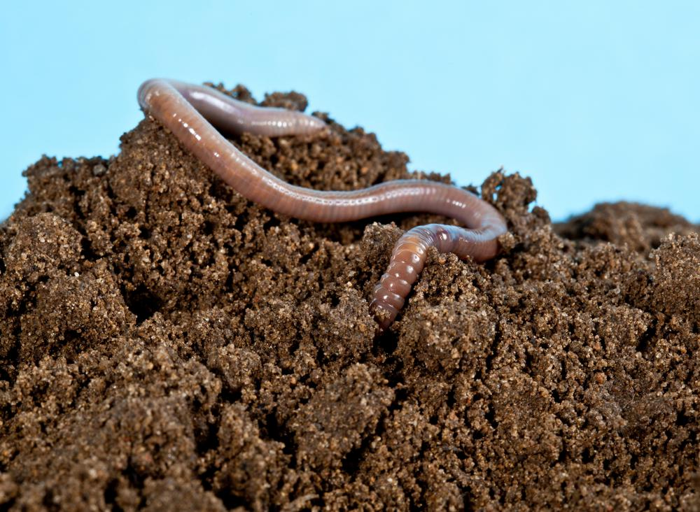 Earthworms are considered to be part of the mesofauna group.