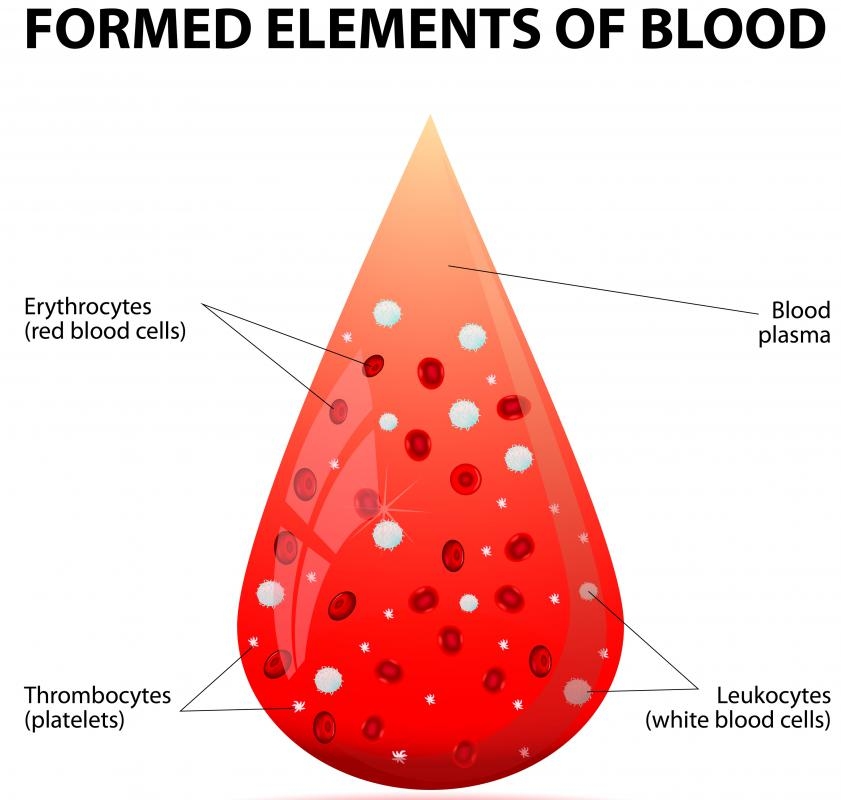 White blood cells are considered to be the main fighting soldiers in the body's immune system.