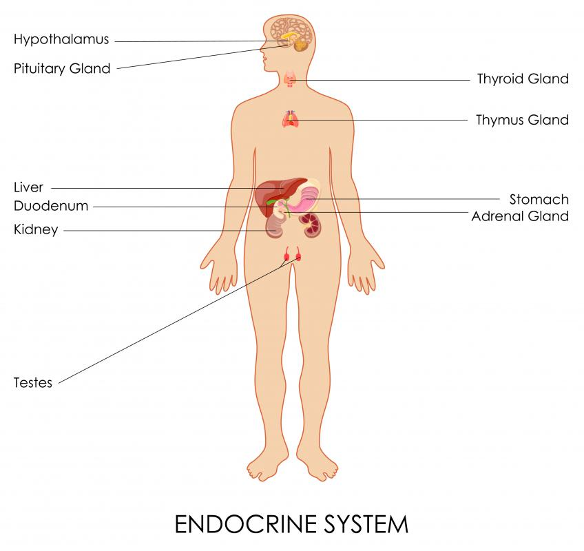 Adrenal glands are members of the endocrine system that excrete hormones to regulate important functions.