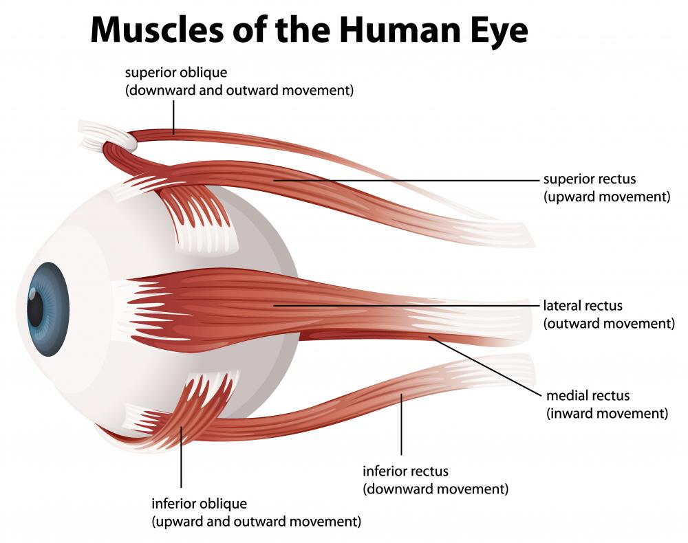 The inferior oblique muscle attaches to the sclera of the eye at a point between two muscles that connect to the inferior and lateral poles of the eye, the inferior and lateral recti.
