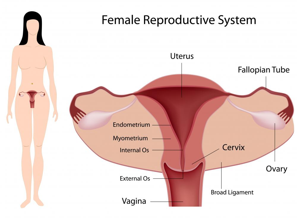 A cervix that is more than 3 inches into the vagina is known as a high cervix.