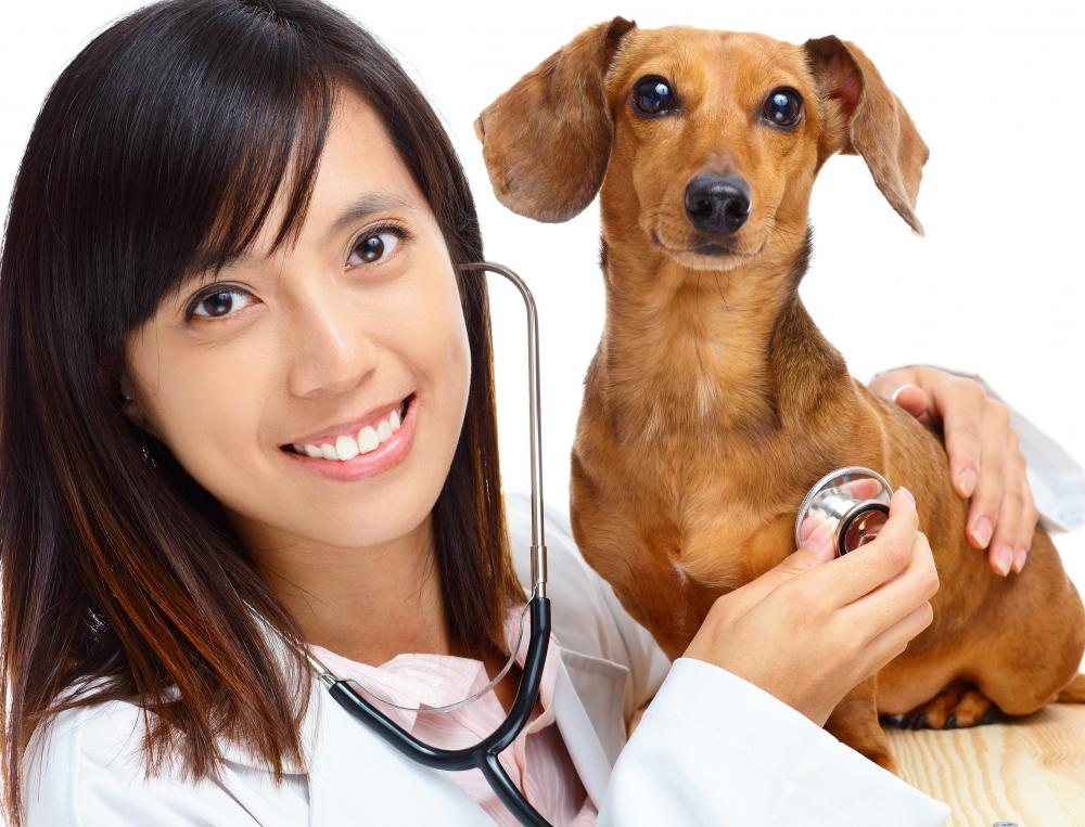 Veterinarians often provide castration services for pets.