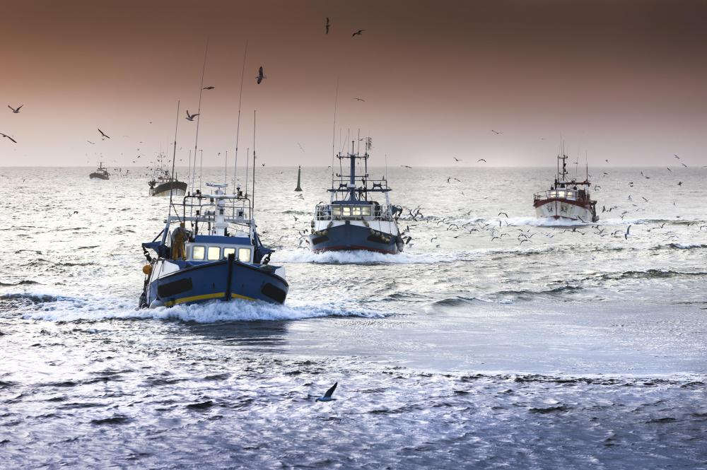 Fishing industry regulations are designed to prevent overfishing and ensure long-term sustainability.