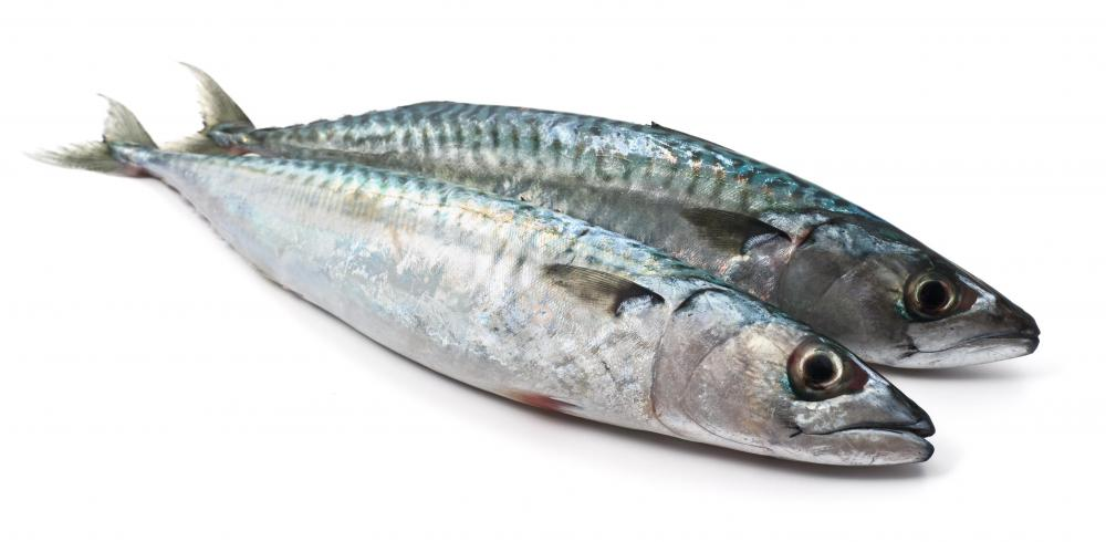 Mackerel is often used as the source for fish oil tablets.