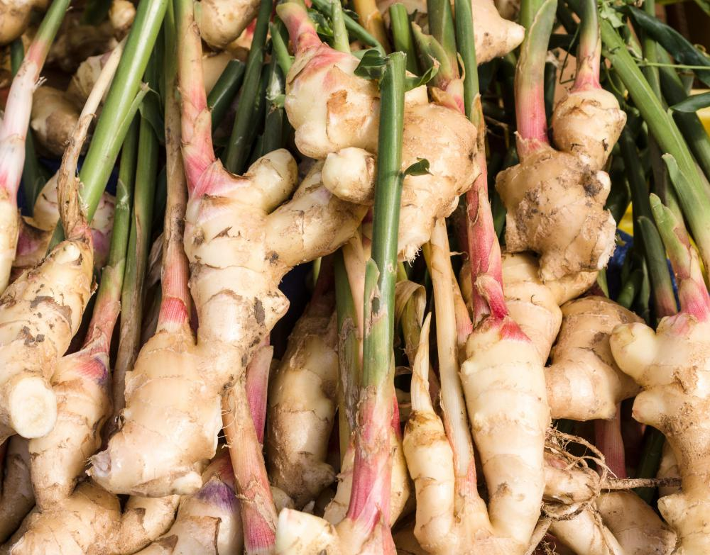Ginger is a rhizome.
