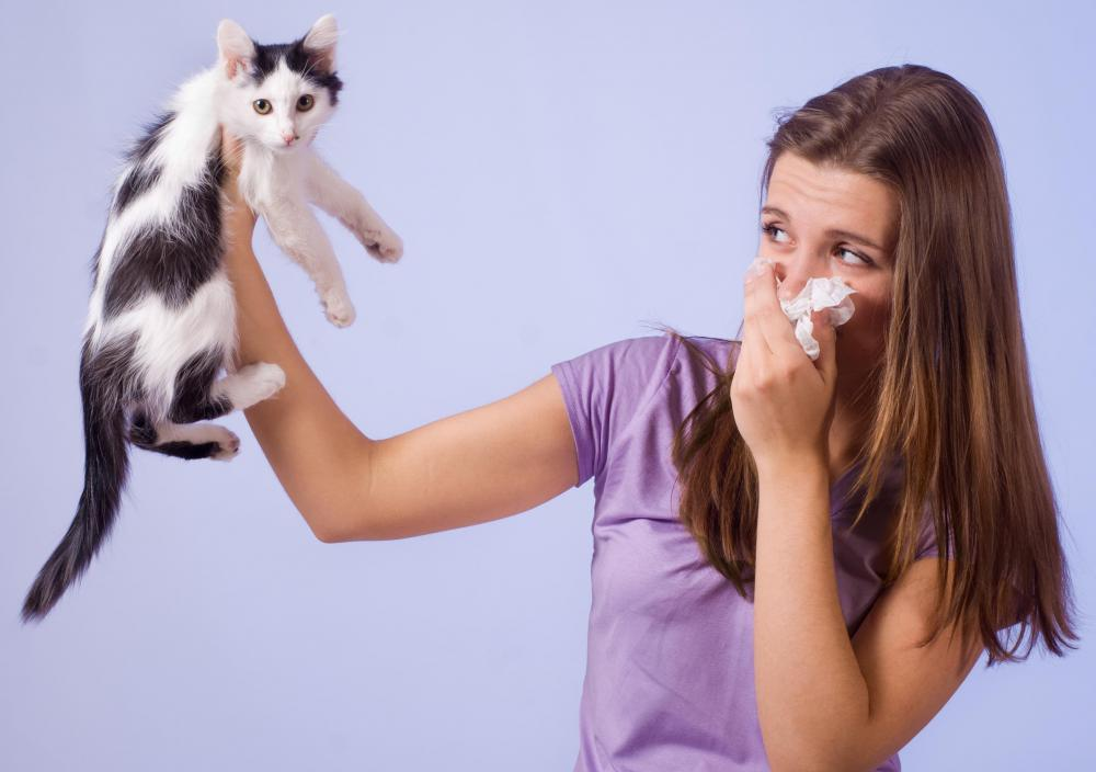 An allergy may only produce symptoms when the person is exposed to an allergen, such as a cat and its dander.