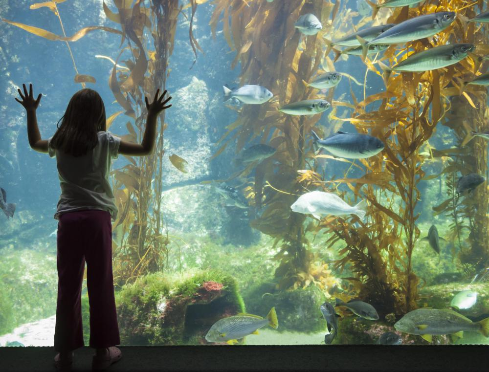 A trip to an aquarium is an educational family excursion.