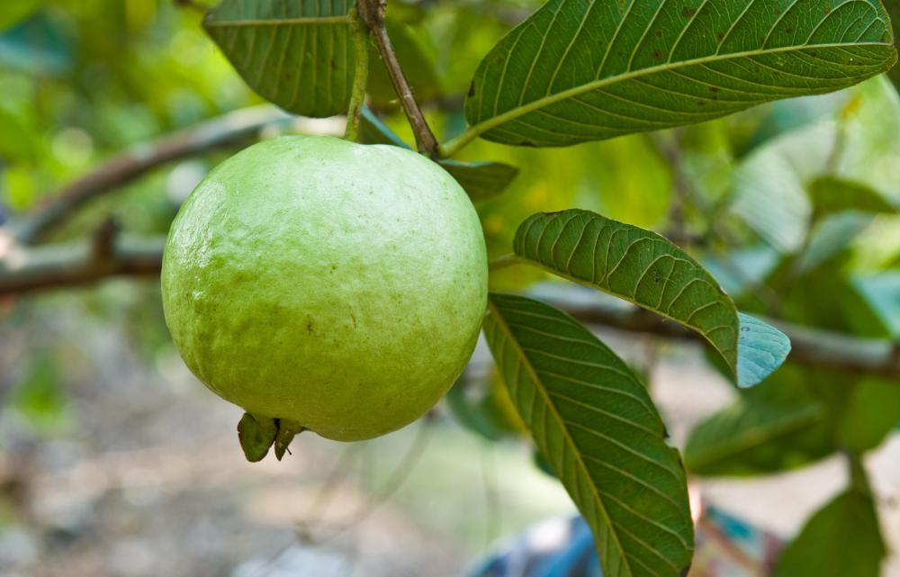 Guava has a high amount of vitamin C.
