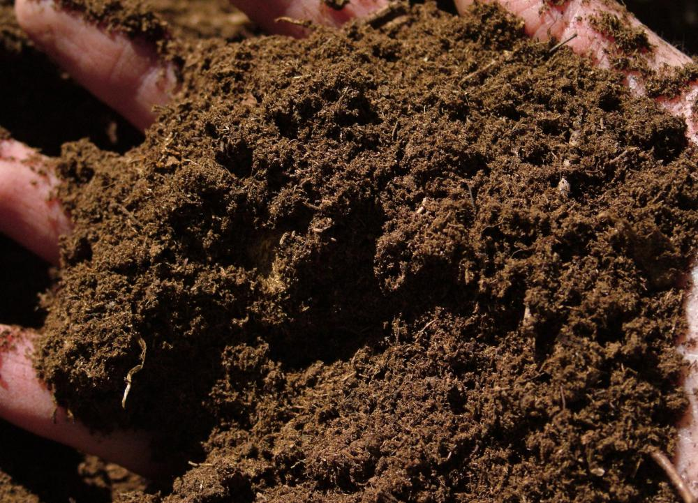 Peat moss, which is often used as an organic fertilizer.