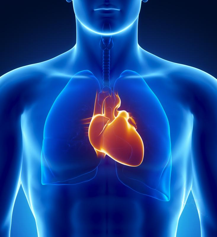 The PNS helps to promote a slower heart beat.
