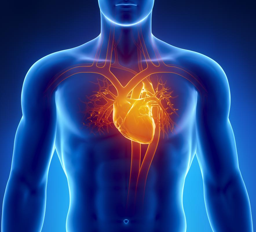 The lowest tip of the heart is referred to as the apex.