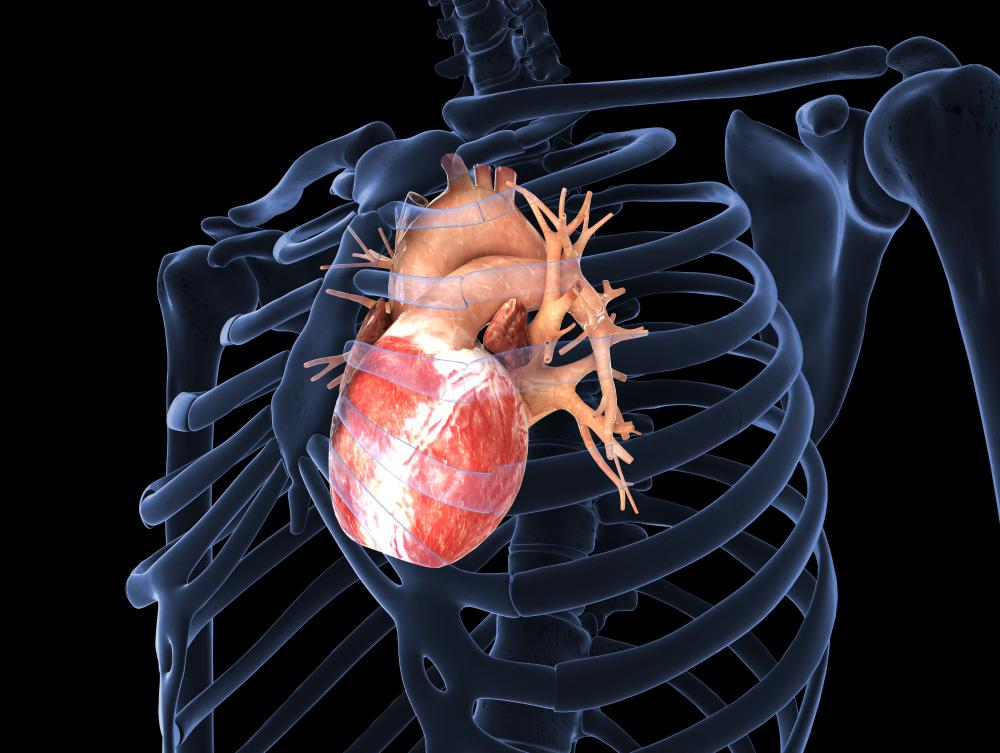 The heart is also known as the cardiac muscle.