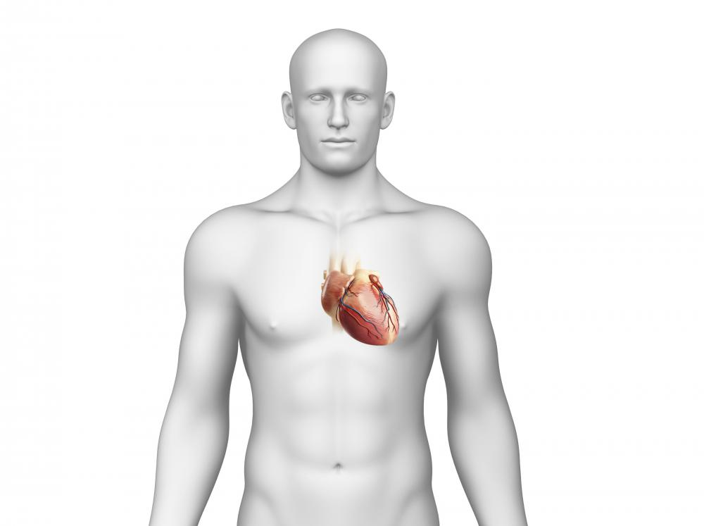 The endothelium lining the heart is also called the endocardium.